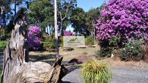 Sitio em Campo Alegre com 12.000 m2, Casa com 169m2
